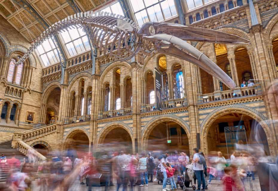 متحف-التاريخ-الطبيعي-في-لندن